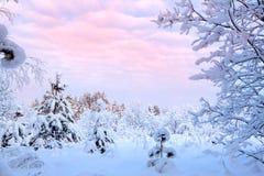 积雪的结构树冬天横向  免版税库存图片