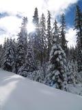 积雪的结构树 免版税库存图片