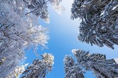 积雪的结构树 库存图片