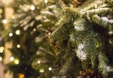 积雪的绿色毛茸的云杉的分支特写镜头,冬天设计装饰 免版税库存图片