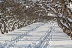 积雪的苹果树在一个果树园在一个冬日 免版税库存照片