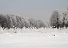 积雪的草甸和树在1月,在一个冷淡的早晨 H 库存照片