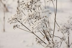 积雪的草 库存图片