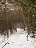 积雪的走道通过在自然冬天寒冷之外的森林 库存照片