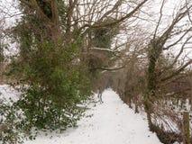 积雪的走道通过在自然冬天寒冷之外的森林 图库摄影