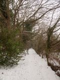 积雪的走道通过在自然冬天寒冷之外的森林 库存图片