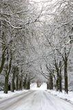 积雪的路和树 免版税图库摄影