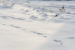 积雪的路在一个冷的冬日 图库摄影