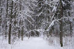 积雪的路在冬天森林里 库存图片