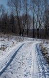 积雪的路在森林里,在一个冬日 免版税库存图片