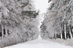 积雪的路通过森林 免版税库存图片