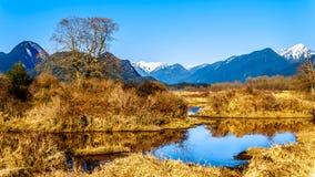 积雪的金黄耳朵山和从彼特Addington沼泽堤看的边缘峰顶费沙尔谷的在枫树岭附近 库存图片