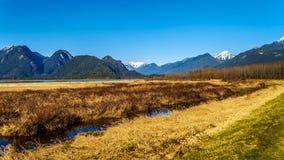 积雪的金黄耳朵山和从彼特Addington沼泽堤看的边缘峰顶费沙尔谷的在枫树岭附近 免版税库存图片