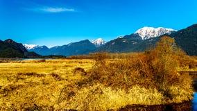 积雪的金黄耳朵山和从彼特Addington沼泽堤看的边缘峰顶费沙尔谷的在枫树岭附近 免版税库存照片