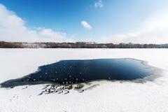 积雪的领域、树和河冬天风景有许多鸟的在冬日 库存照片