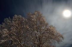 积雪的高桦树有满月和星天空背景 免版税库存照片