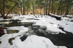 森林雪场面 免版税库存照片