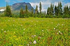 积雪覆盖的山和野花 免版税图库摄影
