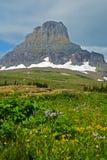 积雪覆盖的山和野花 库存照片
