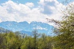 积雪覆盖的山的看法从森林的 库存图片