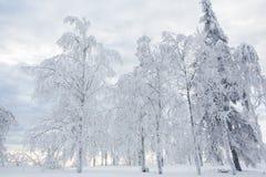 积雪覆盖的树 库存照片