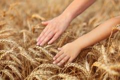 称赞喂养我们的自然 免版税图库摄影