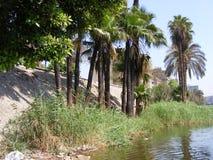 秸杆在国家边的纹理背景在河尼罗开罗附近 库存照片