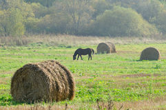 秸杆大包和在域的吃草马 免版税图库摄影