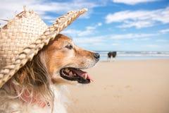 戴秸杆太阳帽子的爱犬在海滩 免版税图库摄影