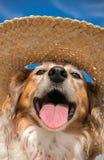 戴秸杆太阳帽子的爱犬在海滩 免版税库存图片