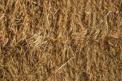 秸杆特写镜头从干草捆的在农场 免版税库存照片