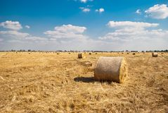 秸杆的领域的圆的干草堆,在一个晴朗的夏日,反对天空和树背景  免版税库存照片