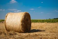 秸杆的领域的圆的干草堆,在一个晴朗的夏日,反对天空和树背景  图库摄影