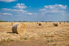 秸杆的领域的圆的干草堆,在一个晴朗的夏日,反对天空和树背景  库存照片