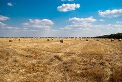 秸杆的领域的圆的干草堆,在一个晴朗的夏日,反对天空和树背景  免版税库存图片