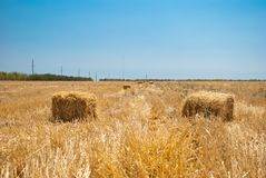 秸杆的领域的长方形干草堆,在一个晴朗的夏日,反对天空和树背景  免版税图库摄影