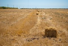 秸杆的领域的长方形干草堆,在一个晴朗的夏日,反对天空和树背景  免版税库存照片