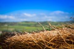 秸杆鸟的干燥巢在树 免版税图库摄影