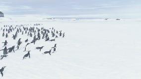 移动向Vernadsky驻地的南极洲企鹅 影视素材
