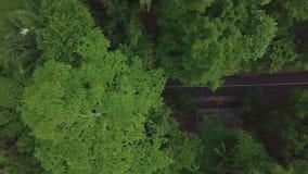 移动在热带高速公路的鸟瞰图摩托车 寄生虫驾驶在绿色热带树的路的视图汽车和摩托车 股票视频