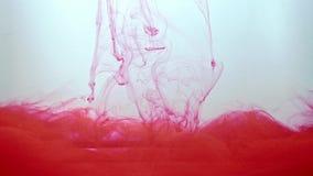移动在白色背景的水中的红色墨水流程 打旋在水中的丙烯酸酯的墨水 液体油漆创造摘要,  股票录像