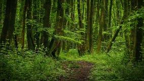 移动在风景道路在森林里 股票录像