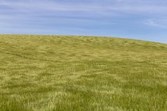 移动微风的麦田 免版税图库摄影