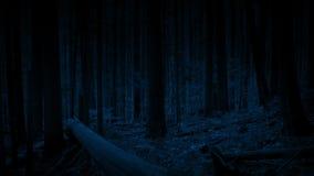 移动森林在晚上 股票视频