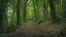 移动横跨俏丽的森林地道路 股票视频