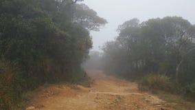 移动沿在热带森林观点步行中的山道路通过雨林道路 第一人景色去 免版税库存图片