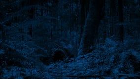 移动沿森林地板在晚上 股票视频