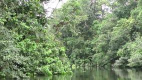 移动的小船通过密集的植被在似亚马逊密林 影视素材