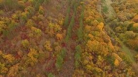 移动远离秋天森林照相机 股票录像