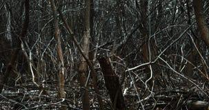 移动通过黑暗的森林 影视素材